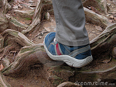 Hiking in the forest