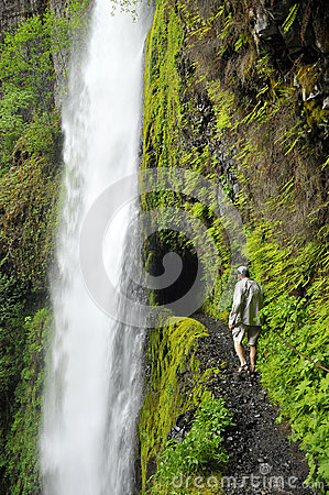 Free Hiking On Eagle Creek Trail Stock Images - 29491994