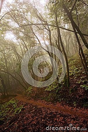 Hiking Path through Foggy Forest