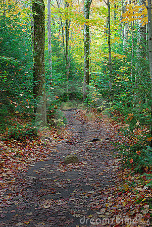 Hiking Path through the Woods