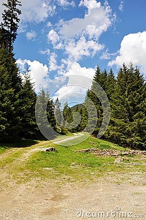 Hiking trail.