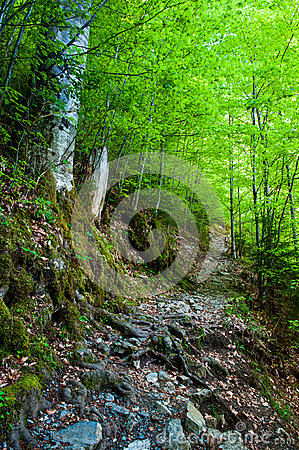 Hiking Trail Stock Photography - Image: 25580322