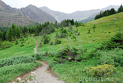 Hiking trail on alpine meadow