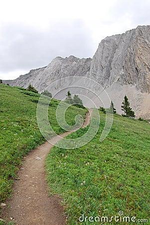 Hiking trail on alpine meadow