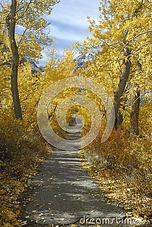 Hiking trail through aspens in autumn