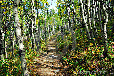 Hiking trail in autumn forest