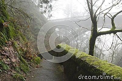A hiking trail on a foggy day