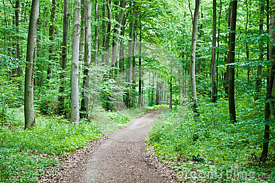 Hiking trail in a green forest