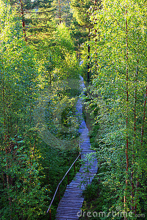 Hiking trail in late spring