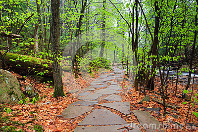 Hiking Trail Through Pennsylvania Forest Stock Images ...