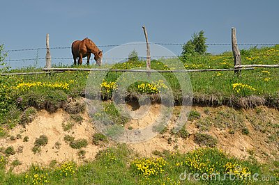 Hill fence horse