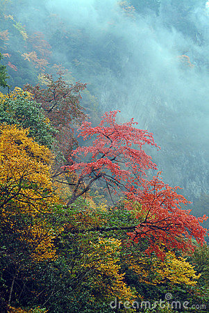 Free Hill Leaves Red All Over Stock Photos - 4777273