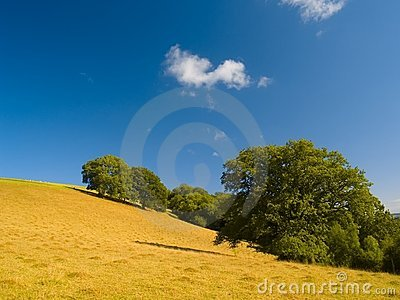 Hill and trees in the summer
