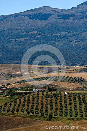 Hills of Andalusia