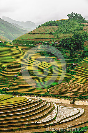 Free Hills Of Rice Terraced Fields Royalty Free Stock Images - 30698479