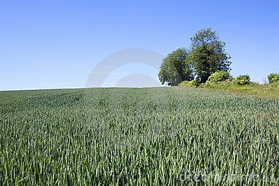 Hillside arable field