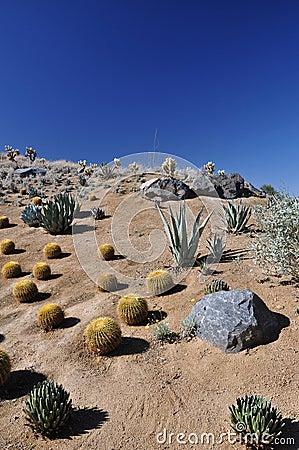 Hillside in the desert