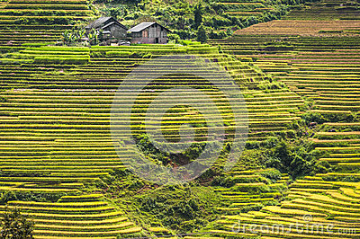 Hillside filled with rice terraces