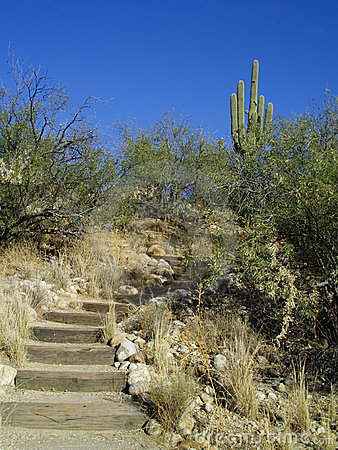 Hillside pathway and steps