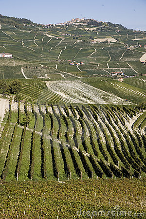 Hillside in Piemonte
