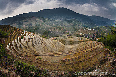 Hillside rice paddies