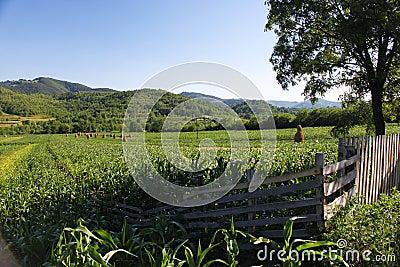 Hillside rural landscape