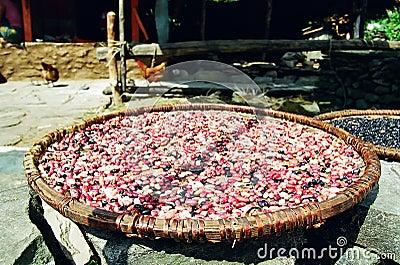 Himalaya Drying Beans, Nepal
