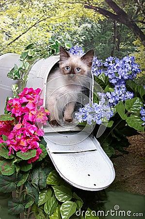 Free Himalayan Kitten In Mailbox Stock Photography - 23034992