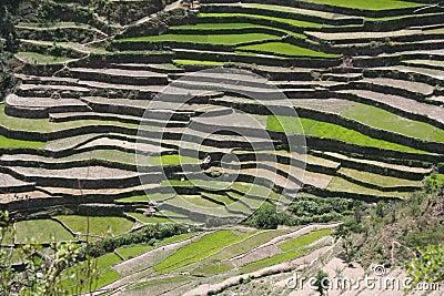Himalayan steppe terrace farming uttaranchal india stock for Terrace farming in india