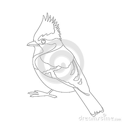 Free Himalayan Tit Bird Vector Illustration  Coloring Book Line Royalty Free Stock Image - 119676256