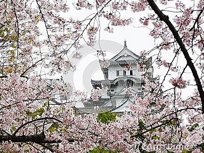 Himeji Castle during Sakura