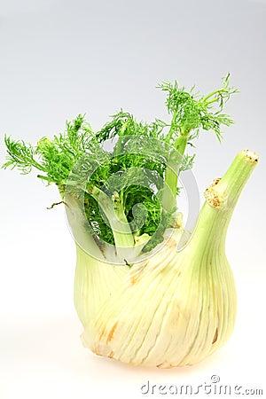 Hinojo vegetal verde