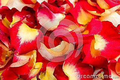 Hintergrund der rosafarbenen Blumenblätter der verschiedenen Farbe