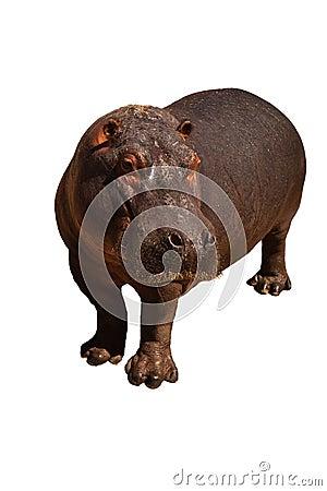 Hippo isolated