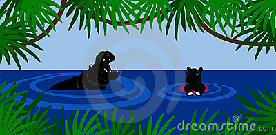 Hippo swimming lesson