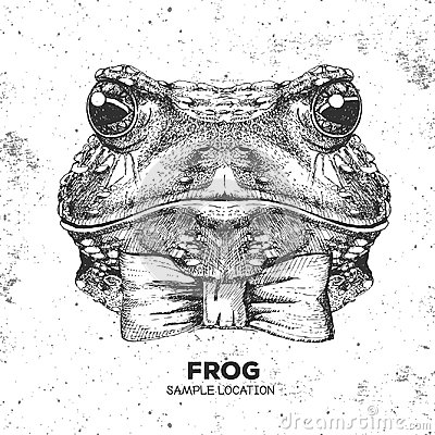 Free Hipster Animal Frog. Hand Drawing Muzzle Of Frog Royalty Free Stock Images - 98805769
