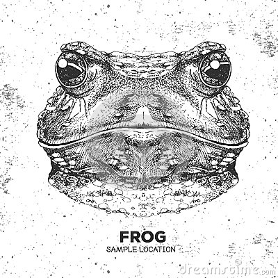 Free Hipster Animal Frog. Hand Drawing Muzzle Of Frog Royalty Free Stock Photos - 98805888