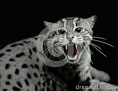 hissing-tiger-cat-12318113.jpg