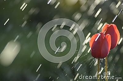 Hit by rain