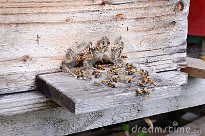 Hive with bees