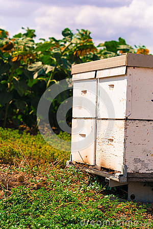 Free Hive By The Bees Royalty Free Stock Photos - 60239578