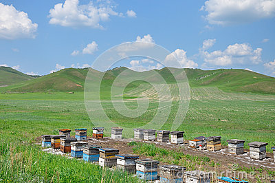 Hive in the grassland