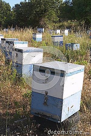 Hives 1