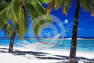 Hängematte zwischen Palmen auf tropischem Strand