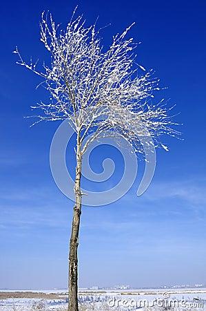 Hoard frost