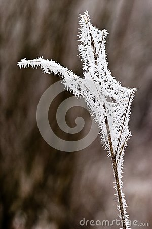 Hoarfrost oder weicher Raureif auf Anlagen an einem Wintertag