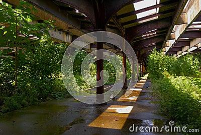Hoboken RR Station Tracks Overgrown