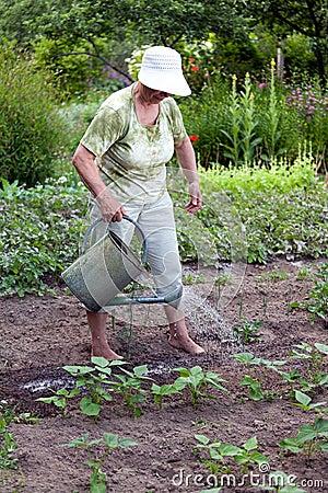 Hogere vrouw die in tuin werkt
