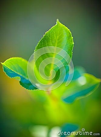 Hojas de la planta verde