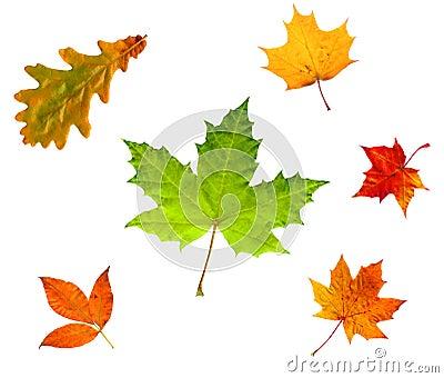 Hojas de otoño aisladas en blanco